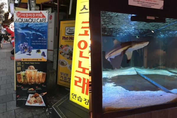 An aquatic café, also in Hongdae, with their main attraction: two sharks, who are kept in a too small container.
